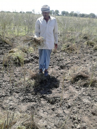 farmer with destroyed crops